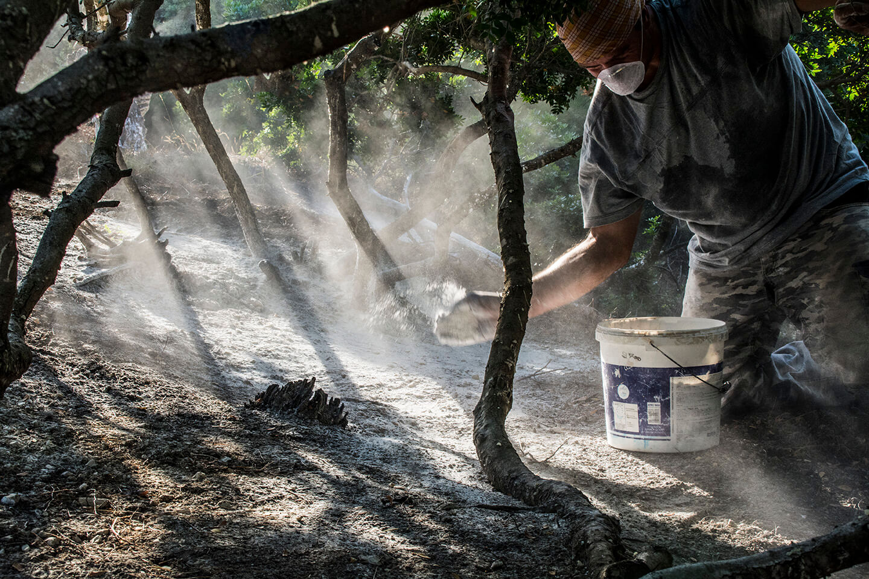 Chios Mastiha Tables Soil Spreading