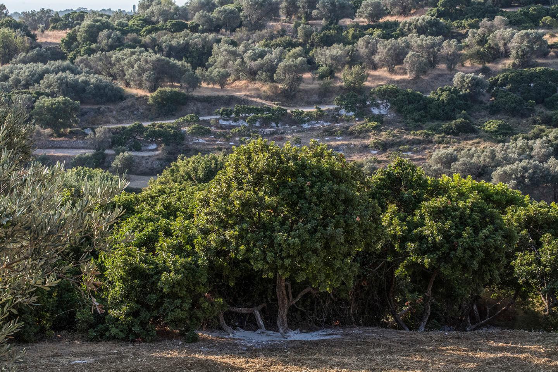 Chios Mastiha Landscapes