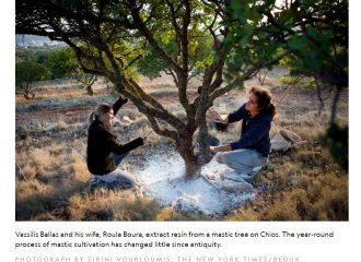 national geographic travel healing plants chios mastiha