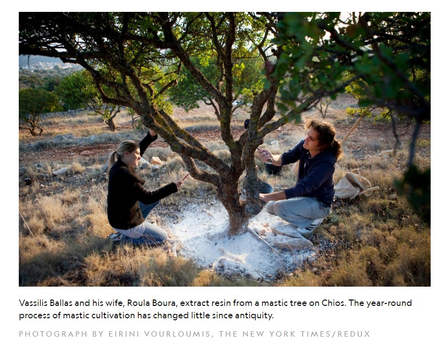 national geographic travel healing plants chios mastiha