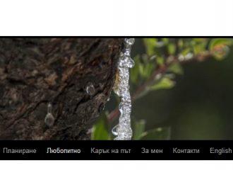 да осиновиш мастихово дърво на о хиос onlin-adopt chios mastiha tree